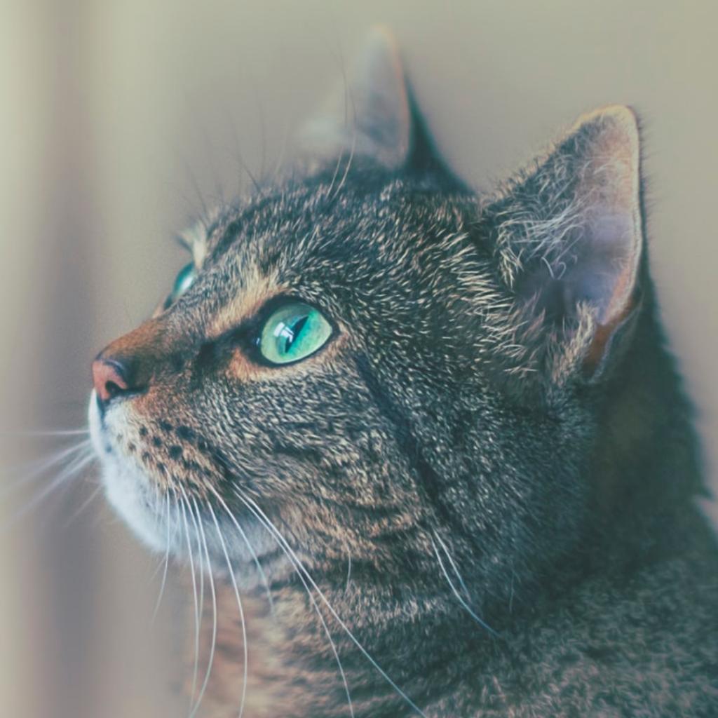 Dit zijn de populairste kattennamen van 2020!