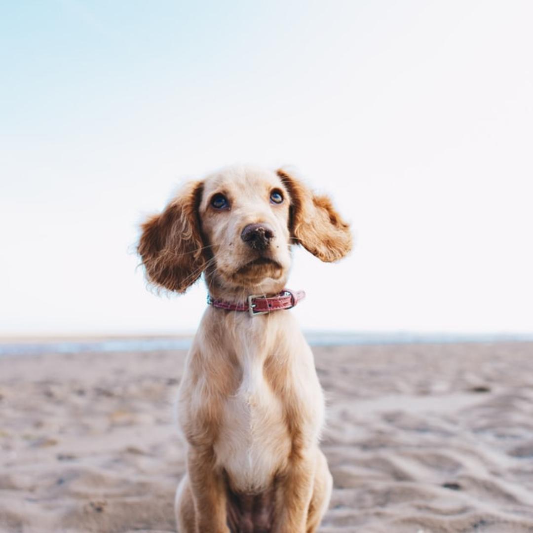 Dit zijn de populairste hondennamen van 2020!
