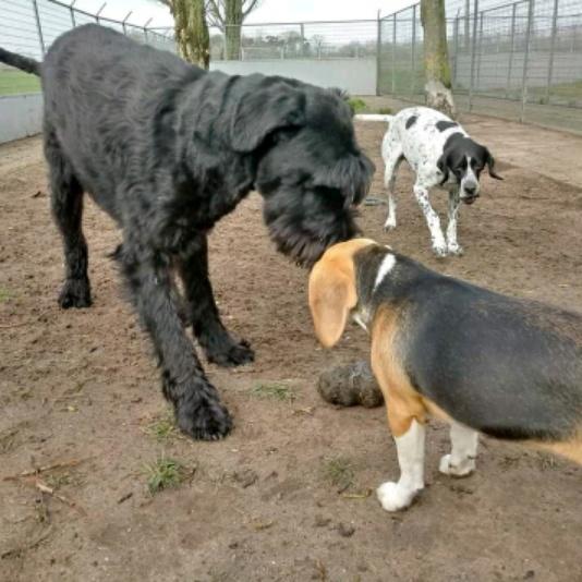 Ik hoor ook de passie voor dieren als je over ze praat!