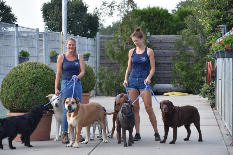 Hondenhotel de Tatelaarhoeve - Teuntje en Cheyenne